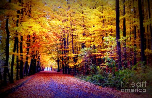 Fall Art Print featuring the photograph Enchanted Fall Forest by Carol Groenen