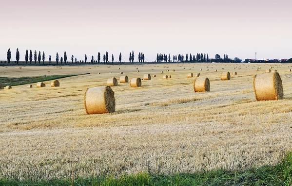 Horizontal Art Print featuring the photograph Hay Bales by You find some of my photos on Getty Images.