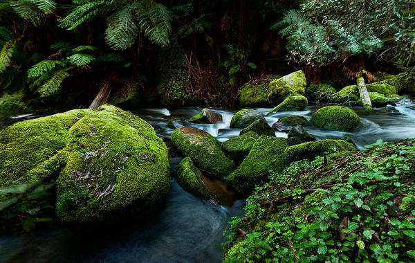 Australia Art Print featuring the photograph Moss Rocks by Heather Thorning