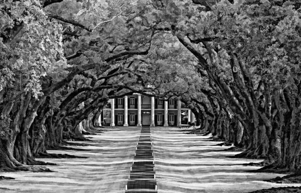 Oak Alley Plantation Art Print featuring the photograph Oak Alley Monochrome by Steve Harrington