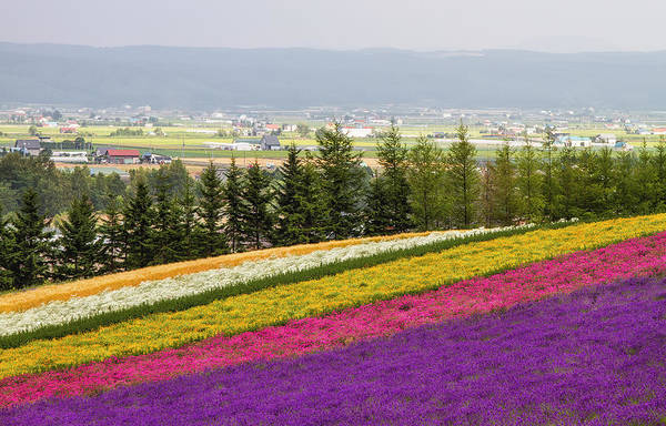 Horizontal Art Print featuring the photograph Rainbow Fields Of Furano by Agustin Rafael C. Reyes