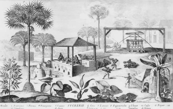 History Art Print featuring the photograph Sugar Production In The West Indies by Everett