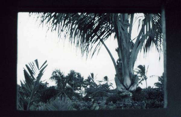 Palm Tree Art Print featuring the photograph Window To Paradise by Jennifer Ott