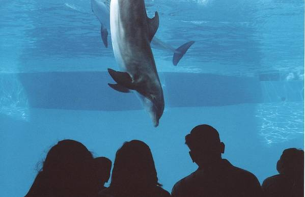 Dolphin Art Print featuring the photograph Aquarium Dolphin by Wendell Baggett