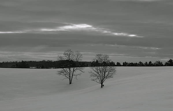 Trees Art Print featuring the photograph Black And White by Glenn Vidal