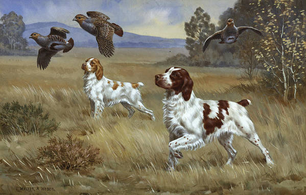 Illustration Art Print featuring the photograph Brittany Spaniels Flush Three Birds by Walter A. Weber
