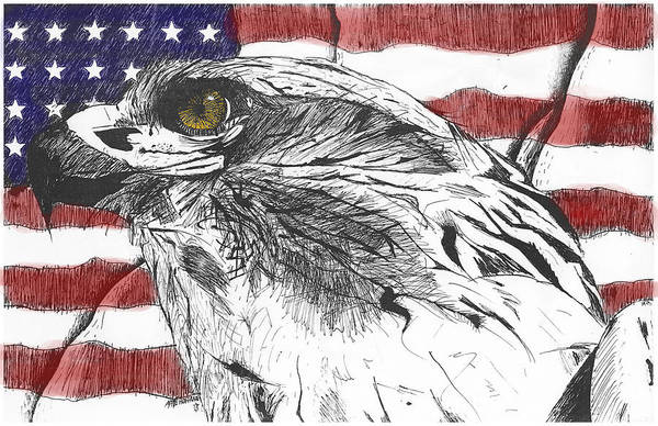 Patriotic Art Print featuring the drawing Eagle by Nathaniel Hoffman