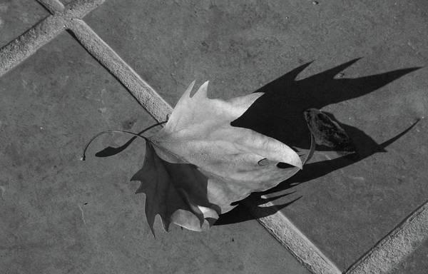 Fallen Leaf Art Print featuring the photograph Fallen Leaf by Yavor Kanchev