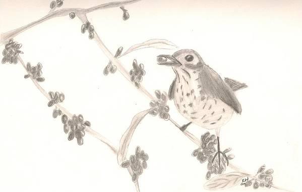 Bird Art Print featuring the drawing Little Bird by Kristen Hurley
