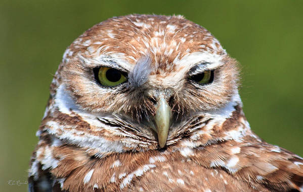 Florida Art Print featuring the photograph Marco Burrowing Owl - I Know What You're Thinking by Ronald Reid