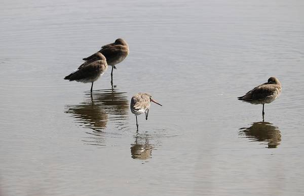 Reflection Art Print featuring the photograph One Legged Stand by Michaela Perryman