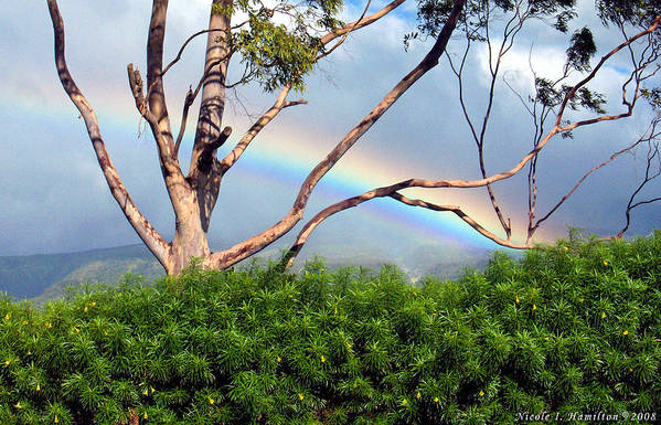 Rainbow Art Print featuring the photograph Rainbow In The Trees by Nicole I Hamilton