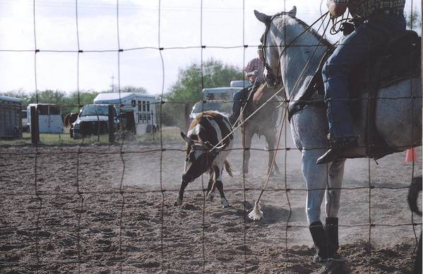 Horse Art Print featuring the photograph Roping Event 5 by Wendell Baggett