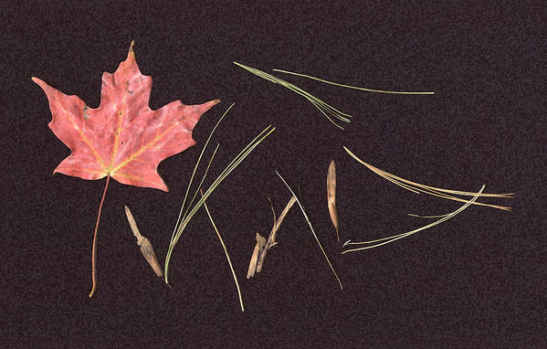 Leaf Art Print featuring the photograph Secret Language Of The Forest by Kevin Callahan