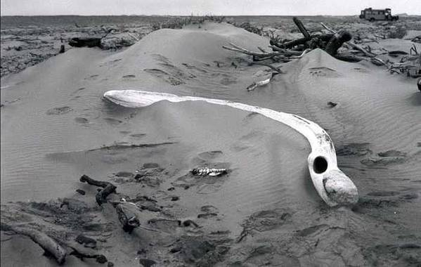 Skeleton Coast Art Print featuring the photograph Skeleton Coast Whalebone by Susan Chandler