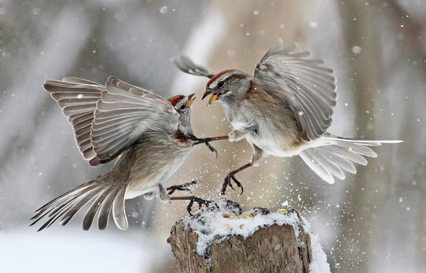 Tree Art Print featuring the photograph Sparrows by Mircea Costina Photography