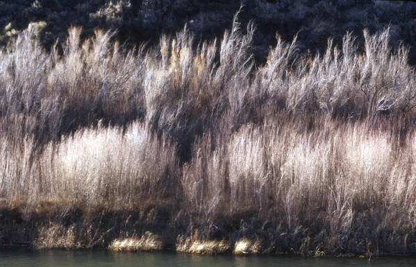 Landscape Art Print featuring the photograph River Sage by Lynard Stroud