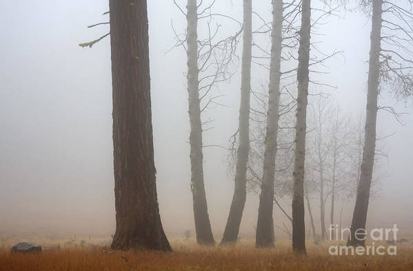 Fog Art Print featuring the photograph Out Of The Fog by Mike Dawson