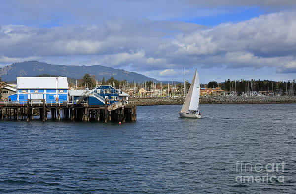 Sidney Art Print featuring the photograph A Sailing Yacht Passes The Wharf In Sidney Harbour by Louise Heusinkveld