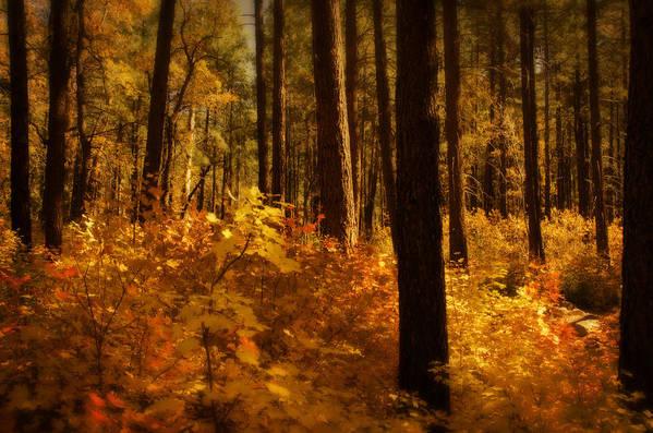 Fall Art Print featuring the photograph A Walk Through The Woods by Saija Lehtonen