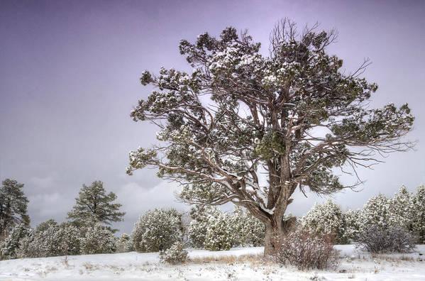 Winter Art Print featuring the photograph A Winter's Day by Saija Lehtonen