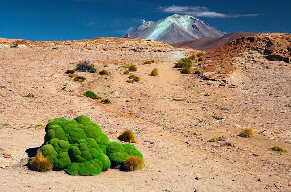 Altiplano Art Print featuring the photograph Altiplano Landscape by Dirk Ercken