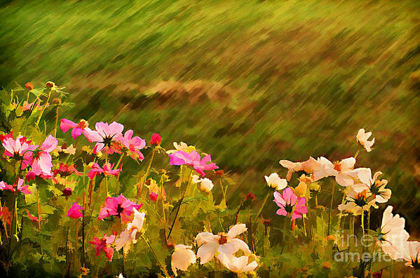 Background Art Print featuring the photograph Beautiful Cosmos by Darren Fisher