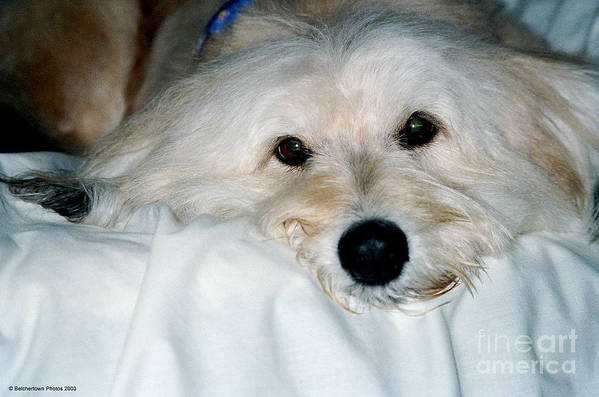 Dog Art Print featuring the photograph Bessie Eyes by Randi Shenkman