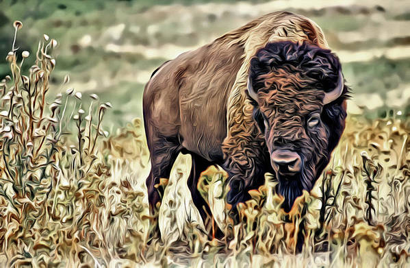 Bison Art Print featuring the photograph Bison by Carlos Diaz