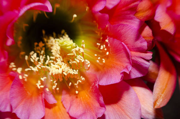 Flower Art Print featuring the photograph Blooming Pink Explosions by Richard Henne