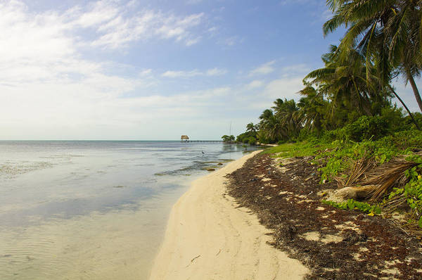 Belize Art Print featuring the photograph Caribbean Beach In Ambergris Caye Belize by Brandon Bourdages