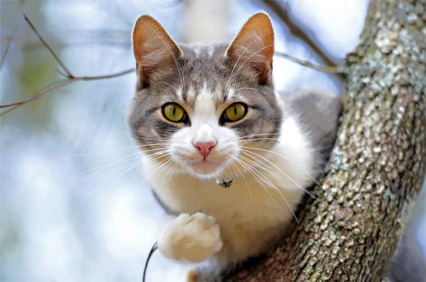 Cat Art Print featuring the photograph Cat In A Tree by Susan Leggett