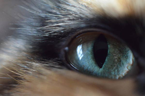 Cat Art Print featuring the photograph Cat's Eye by Meghan Cahilly