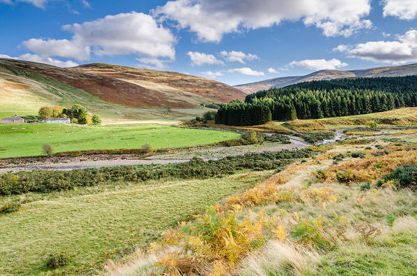 Northumberland Art Print featuring the photograph College Valley Forest by David Head