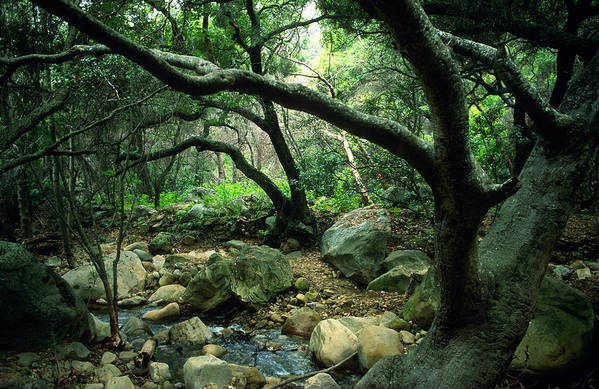 Landscape Print featuring the photograph Creek In Woods by Kathy Yates