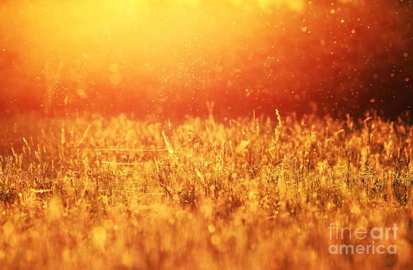 Lawn Art Print featuring the photograph Dusk Mood by Sorin Rechitan