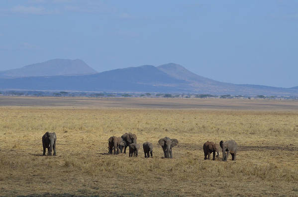 Panoramic Art Print featuring the photograph Elephant Family With Landscape by Tom Wurl