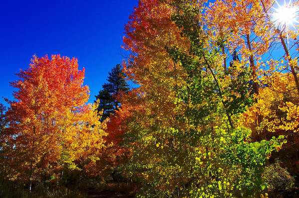 Aspen Trees Art Print featuring the photograph Fall Foliage Palette by Scott McGuire