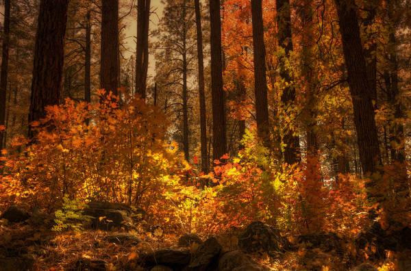 Fall Art Print featuring the photograph Fall Forest by Saija Lehtonen