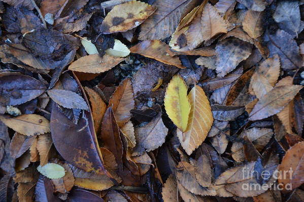 Autumn Art Print featuring the photograph Fallen Leaves by Charles Majewski