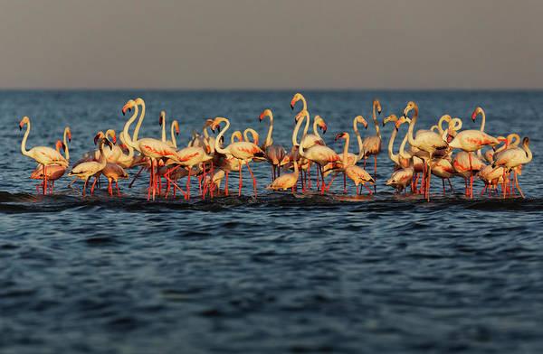 Outdoors Art Print featuring the photograph Flamingos On Lake Turkana Outside Elyse by Randy Olson
