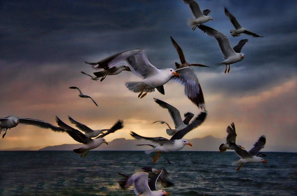Lake Art Print featuring the photograph Flight Of The Seagulls by Gene Praag