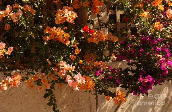 Trellis Print featuring the photograph Flower Trellis In La Jolla by Anna Lisa Yoder