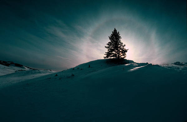 Boreal Print featuring the photograph Fv4157, Will Datene Pine Tree On A Hill by Will Datene