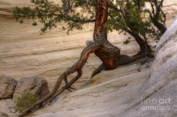 Tree Art Print featuring the photograph Living Gracefully by Bob Christopher