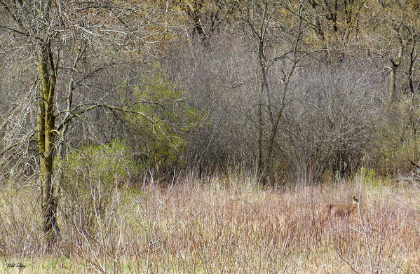 Deer Art Print featuring the photograph Look Closer by Wild Thing