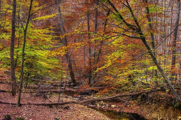 Maryland Art Print featuring the photograph Maryland Country Roads - Autumn Colorfest No. 8 - Catoctin Mountains Frederick County Md by Michael Mazaika