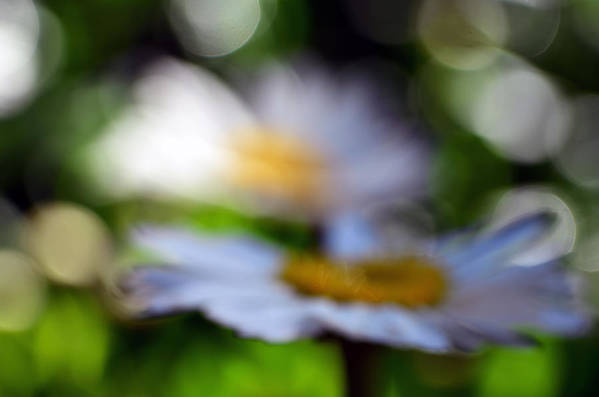 Daisy Art Print featuring the photograph One Glass Of Wine Too Many by Lori Tambakis