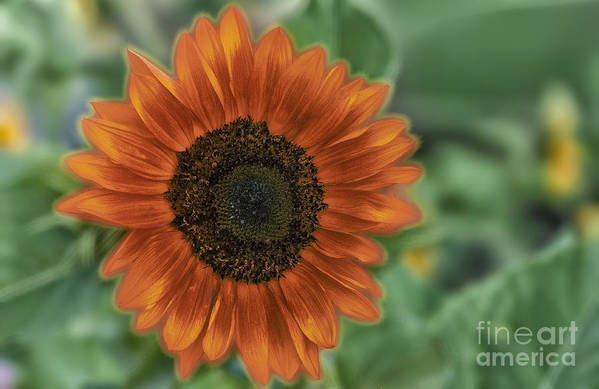 Hdr Art Print featuring the photograph Orange Delight by Sandra Bronstein