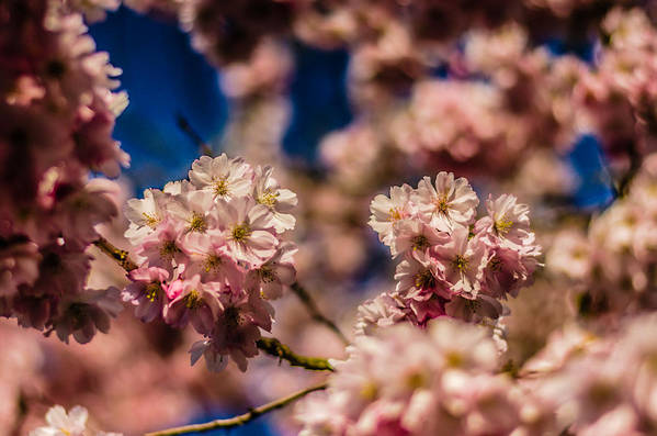 God's Creation Art Print featuring the photograph Pink Petal Profusion by Brian Xavier